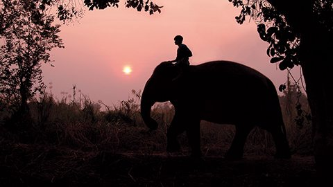 Take a sunrise elephant trek through Thailand