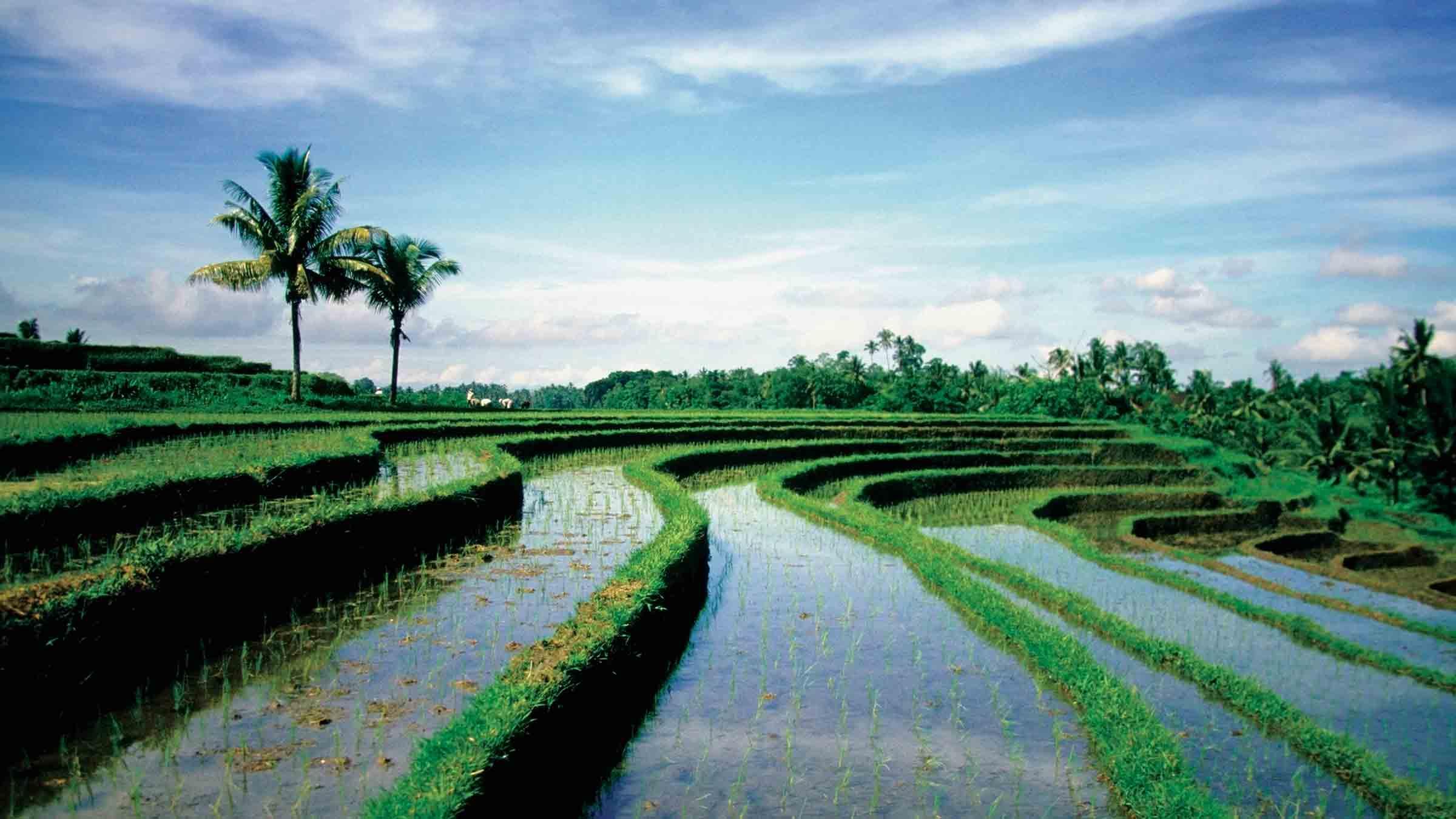 体验巴厘岛农夫的一天