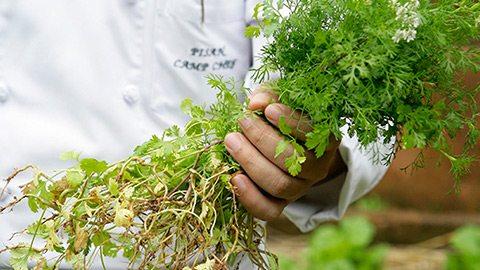和植物学家一起深入密林,寻找那些制作美味盛宴的天然食材。