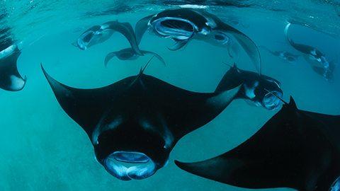 在联合国教科文组织的保护水域里与庞大的海洋生物一起自由遨游。