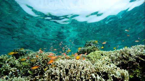 Create your own underwater coral garden in Bora Bora