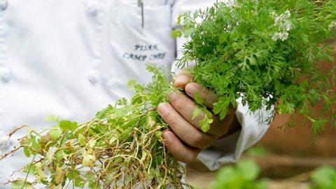 与植物学家一起野外探险,收集本土的食材,准备美味盛宴。