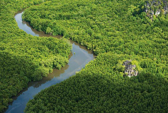 Aerial view of Langkawi mangroves