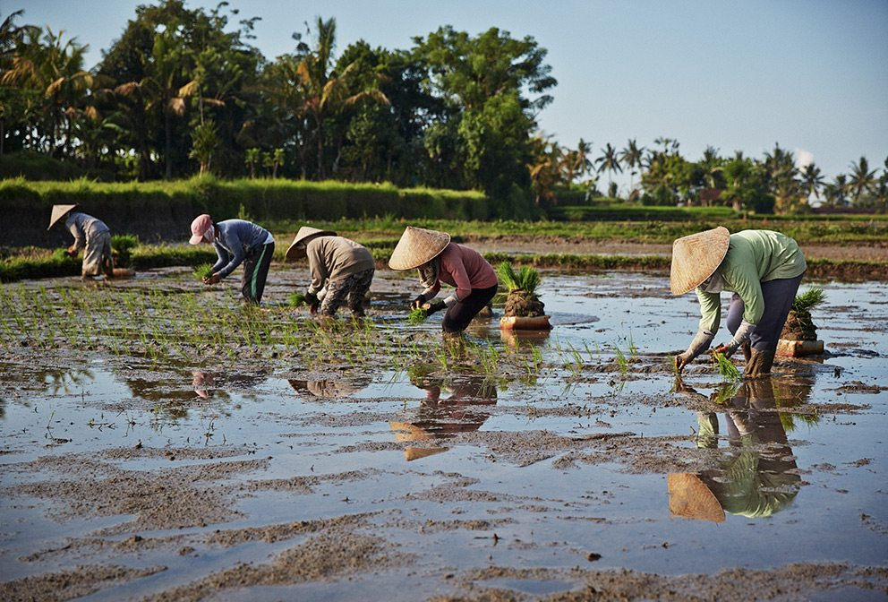 Rice planters in Bali