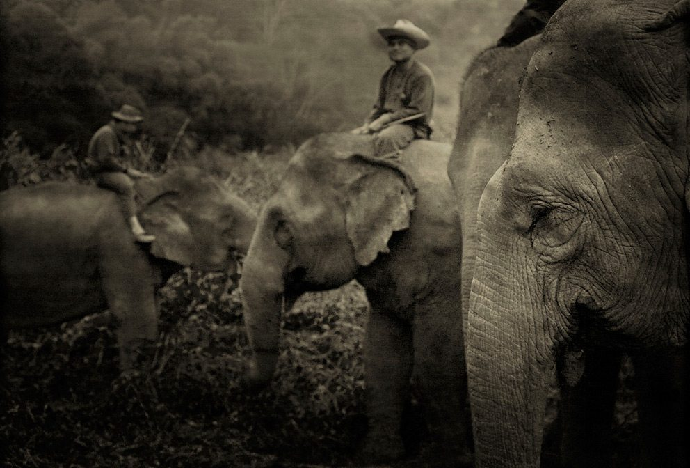 Mahouts riding elephants in Thailand