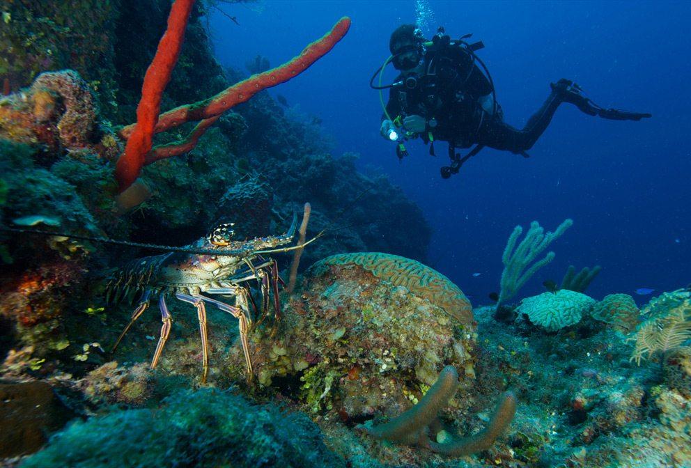 Nevis Underwater Dining