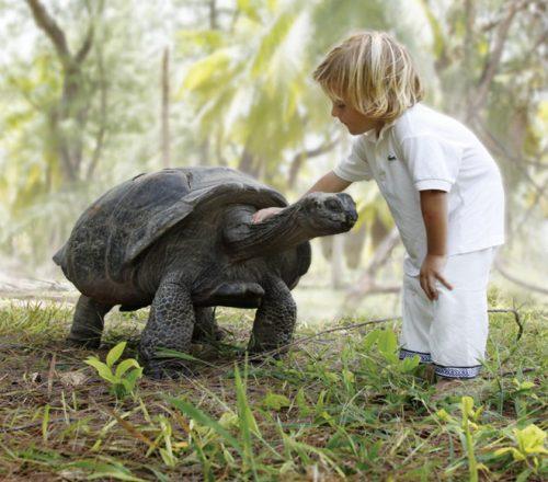 Meeting a Giant Tortoise