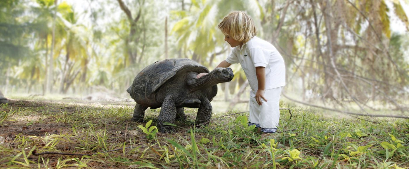 Meeting a Giant Tortoise