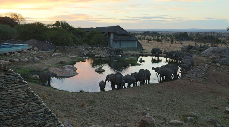Watering Hole Four Seasons Serengeti