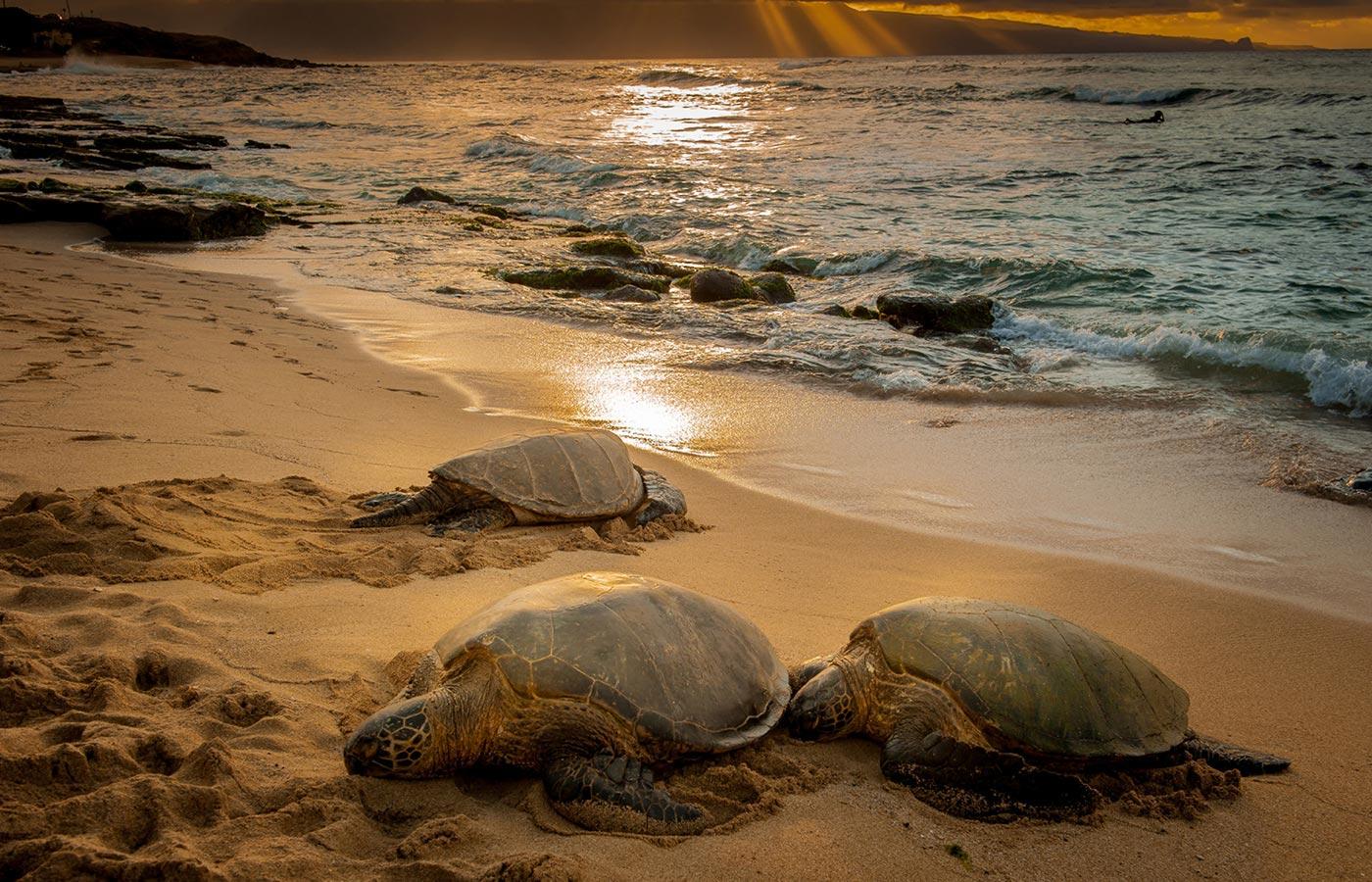 Maui Photo Adventure