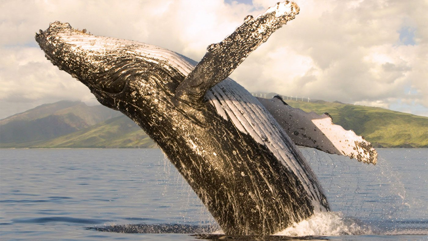 Whale Watch Photo Excursion