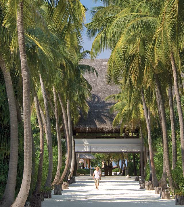 Lane lined with palm tress, Four Seasons Resort Maldives