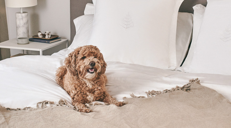 Fs Discover Signature Sleep Revamp Pup