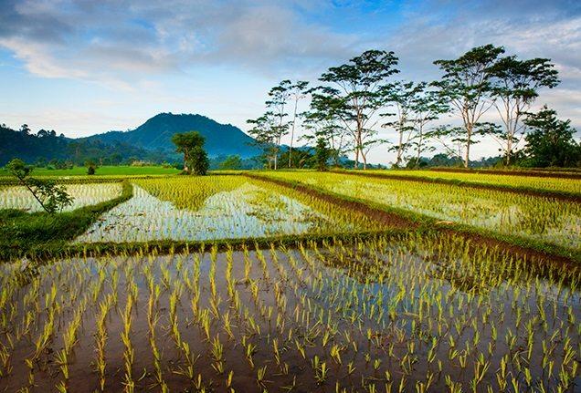Rice fields from Bali Extraordinary Experience