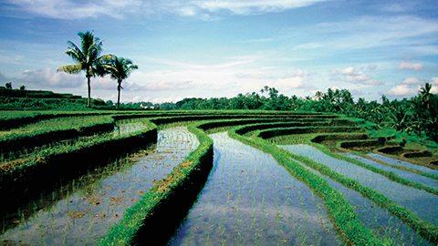 探索巴厘岛的自然之美和田园诗般的生活。
