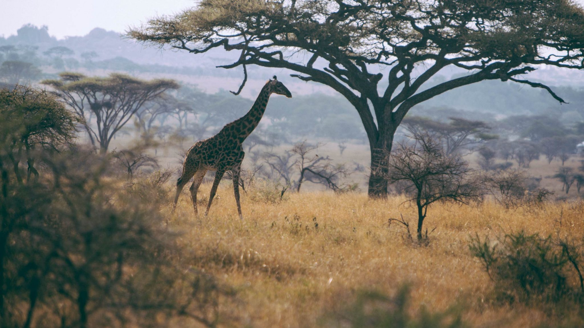 Explore the Wilds of the Serengeti