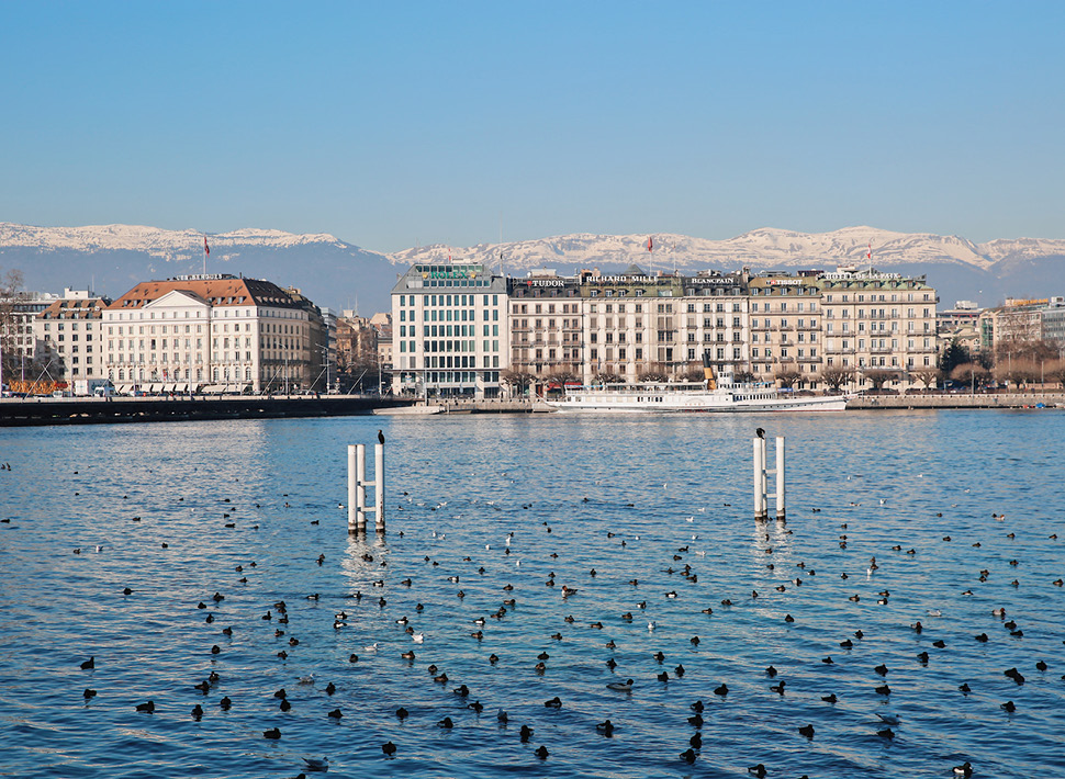 Birds sit in the water of Lake Geneva with view of French Alps in the background