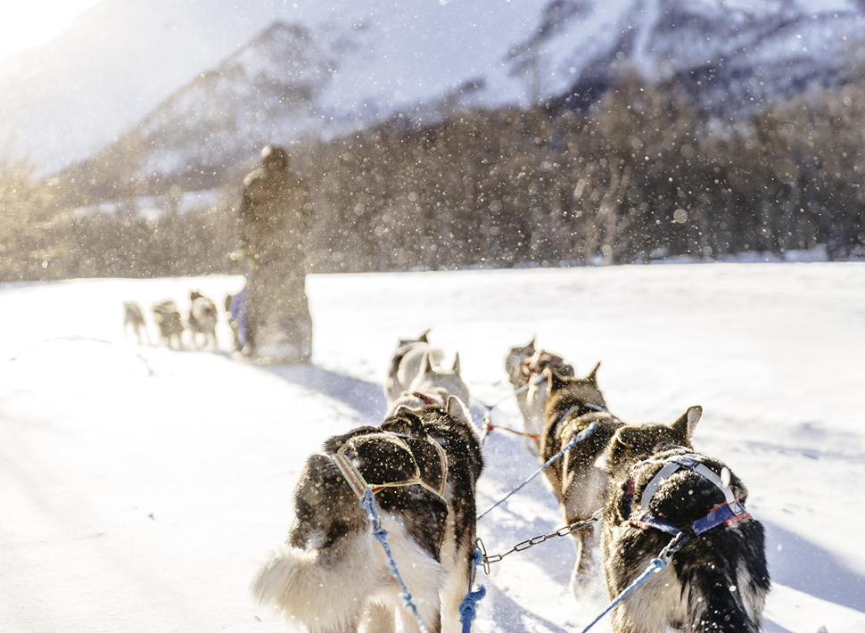 Dog sledding in Vali