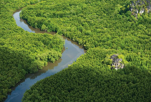 Aerial view of Langkawi mangroves