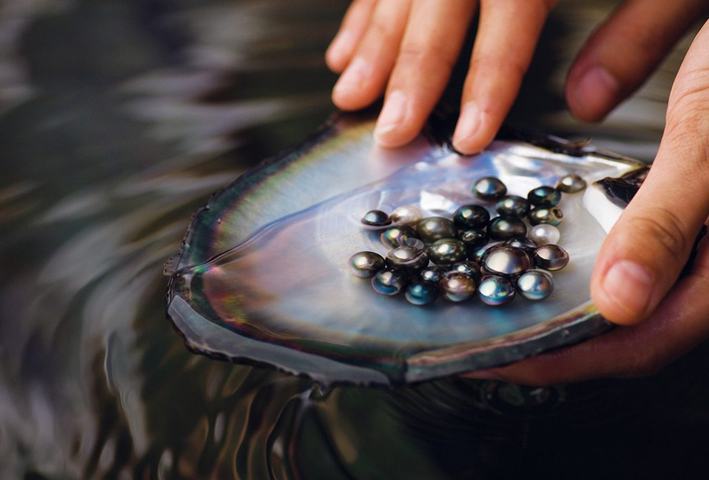 Four Seasons Bahrain Bay Pearl Diving