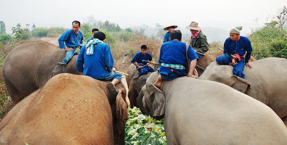 Elephant Mahout Training