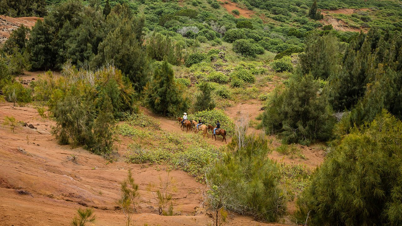 Horseback Riding in Lanai