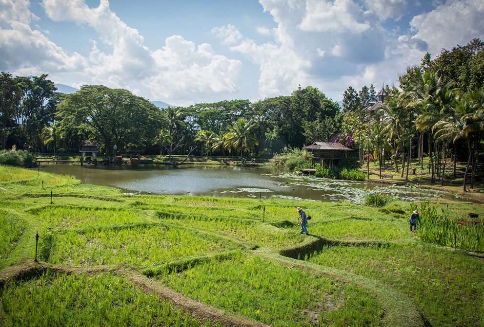 Breakfast in the Rice Fields, Four Seasons Resort Chiang Mai