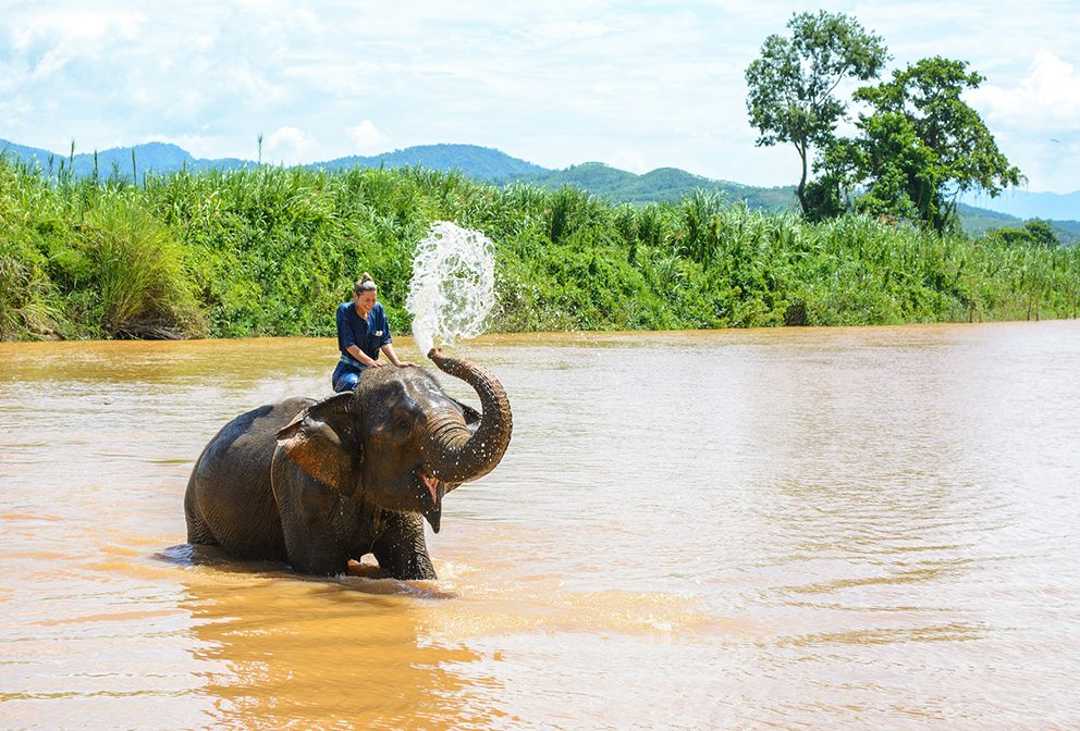 Elephant trek in Chiang Rai