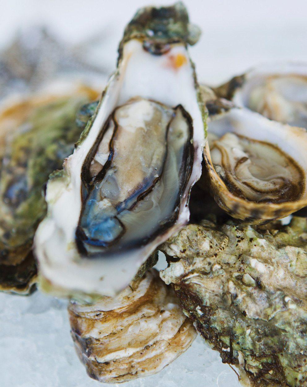Casablanca Oysters