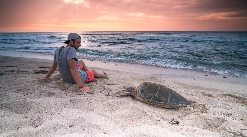 Man sitting near turtle on beach