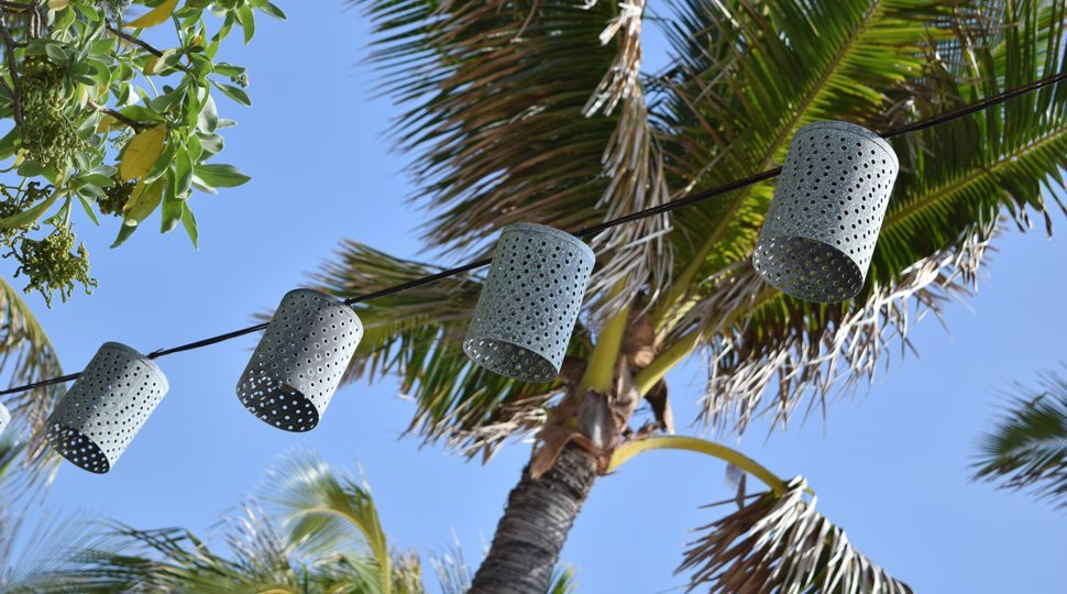 palm trees and lanterns