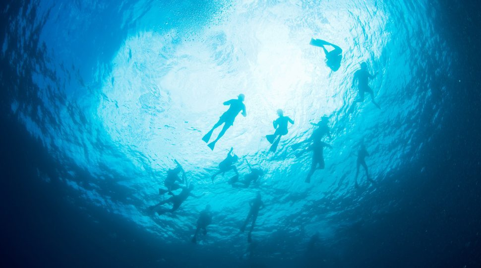 A group of people snorkelling