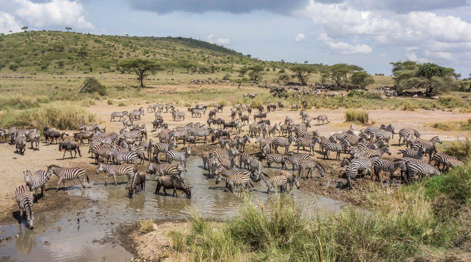 Wild animals at a watering hole near the Four Seasons Serengeti