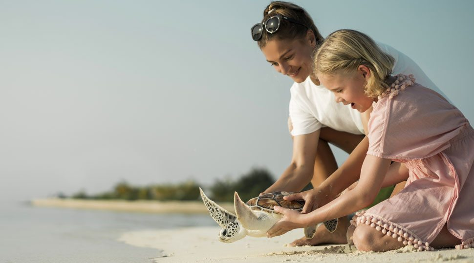 Setting a Turtle Free