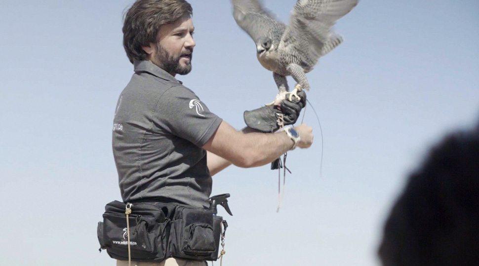 A falcon trainer does a demonstration near Dubai.