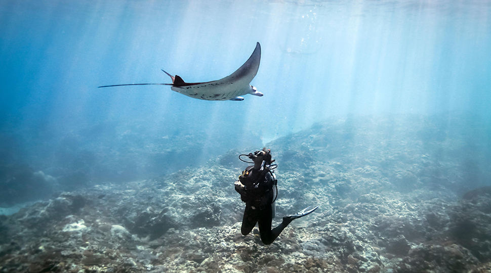 Swimming With Manta Rays In Bora Bora