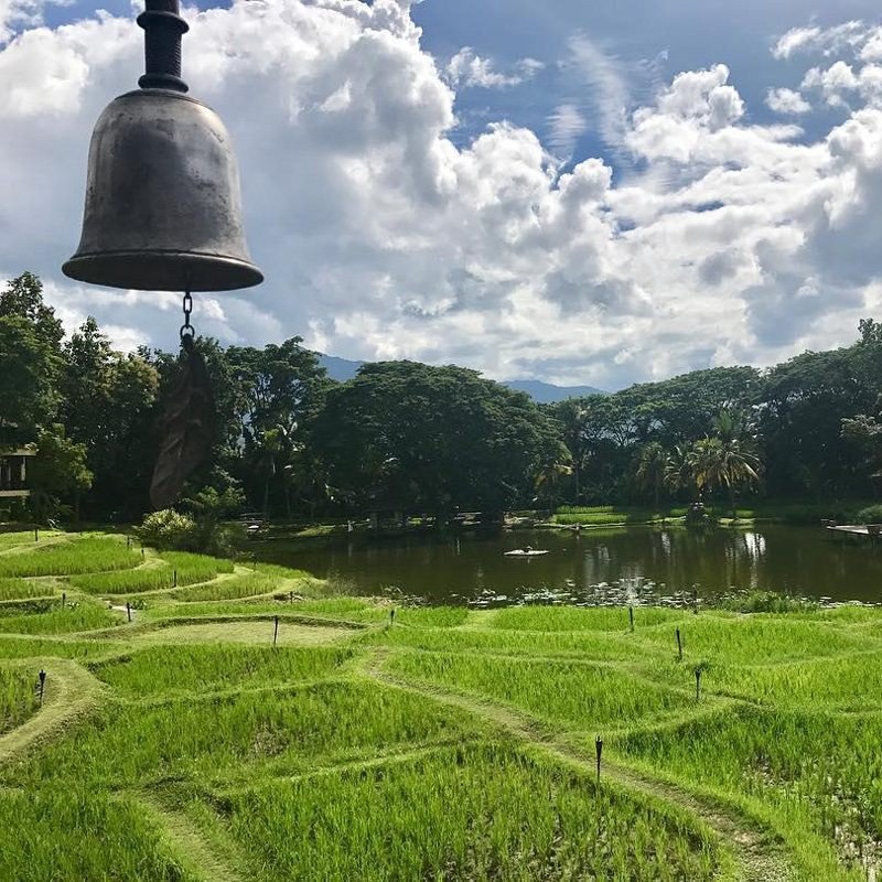 Change Mai rice field with bell