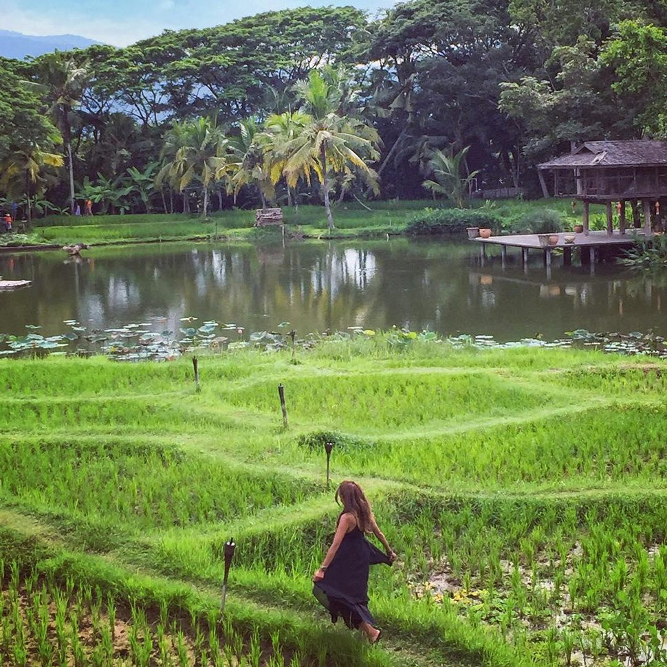 woman walking though Chiang Mai rice garden
