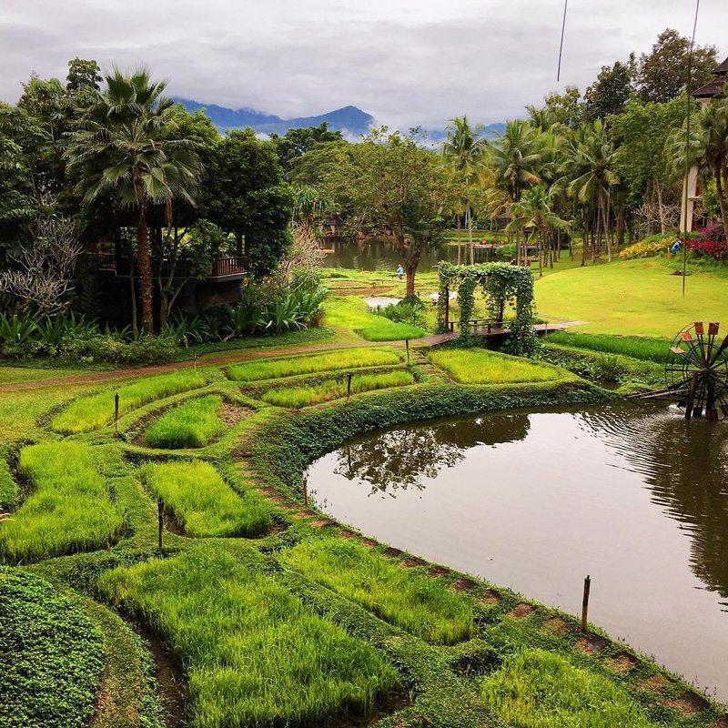 Chiang Mai square garden