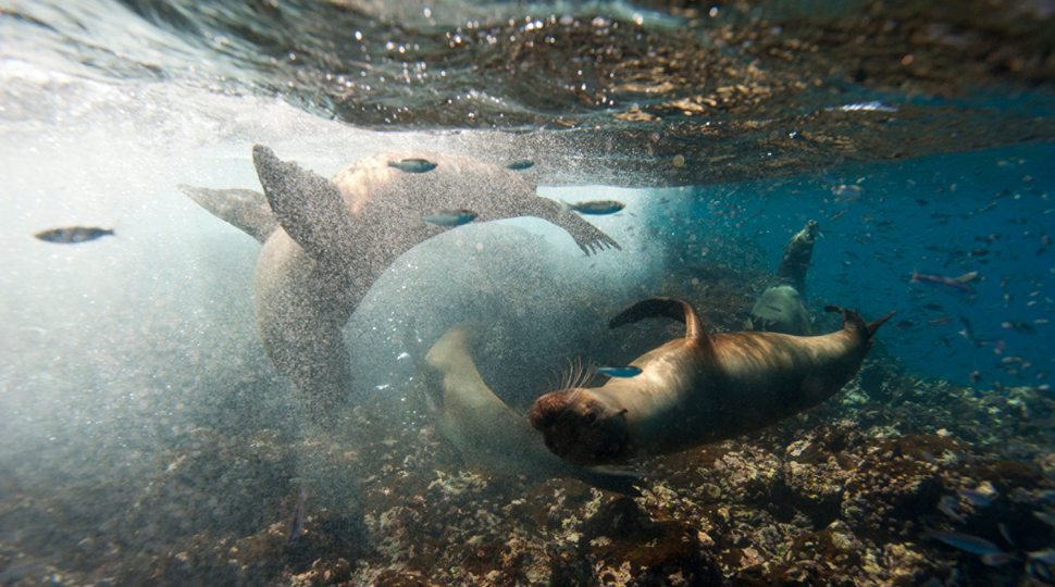 Sea lions in the Galápagos