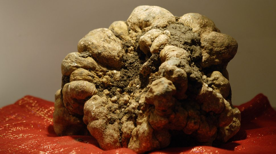World record–winning truffle