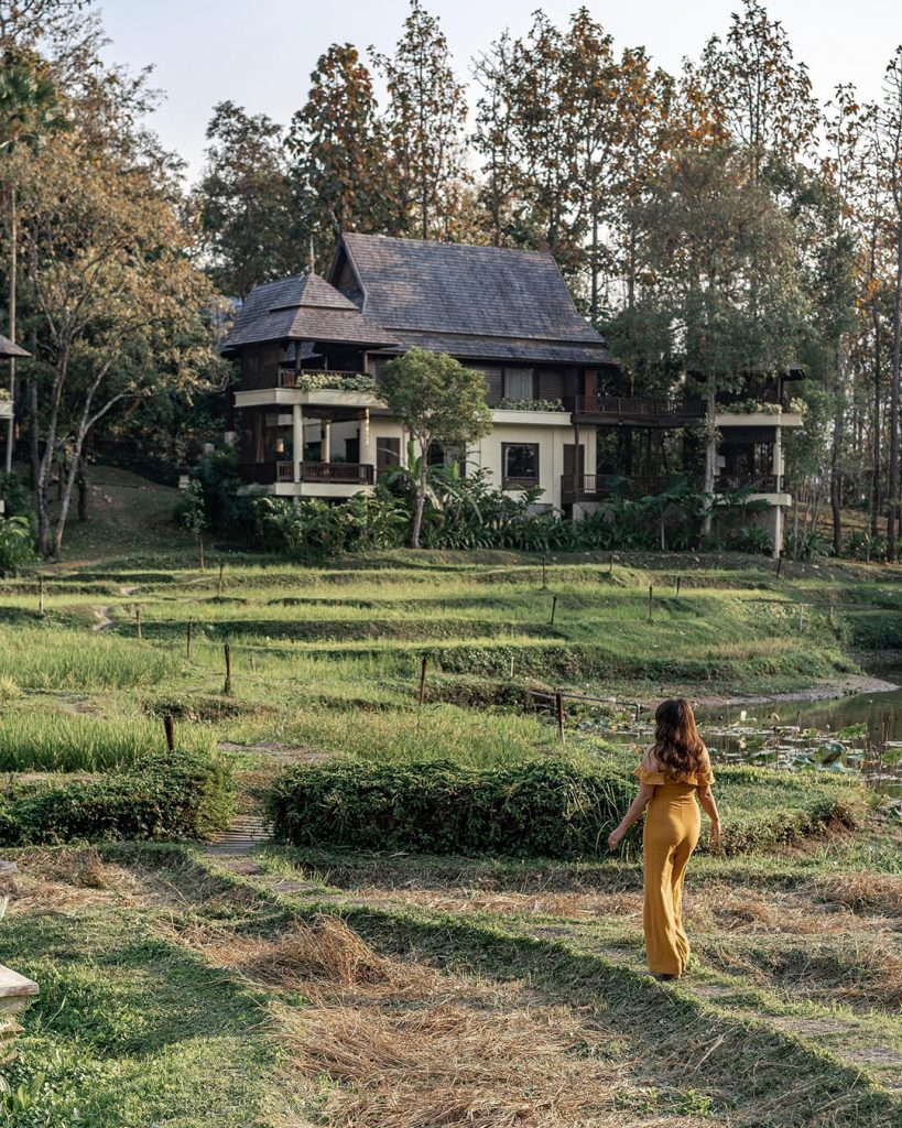 A woman in a yellow dress walls in rice fields