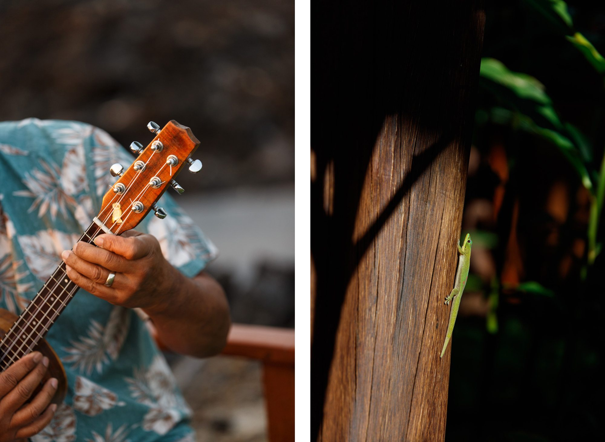 hualalai ukelele, small green lizard comparison
