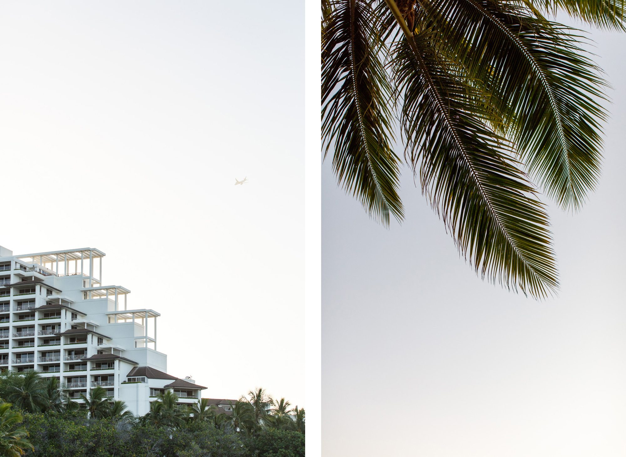 Oahu architecture, palm tree comparison