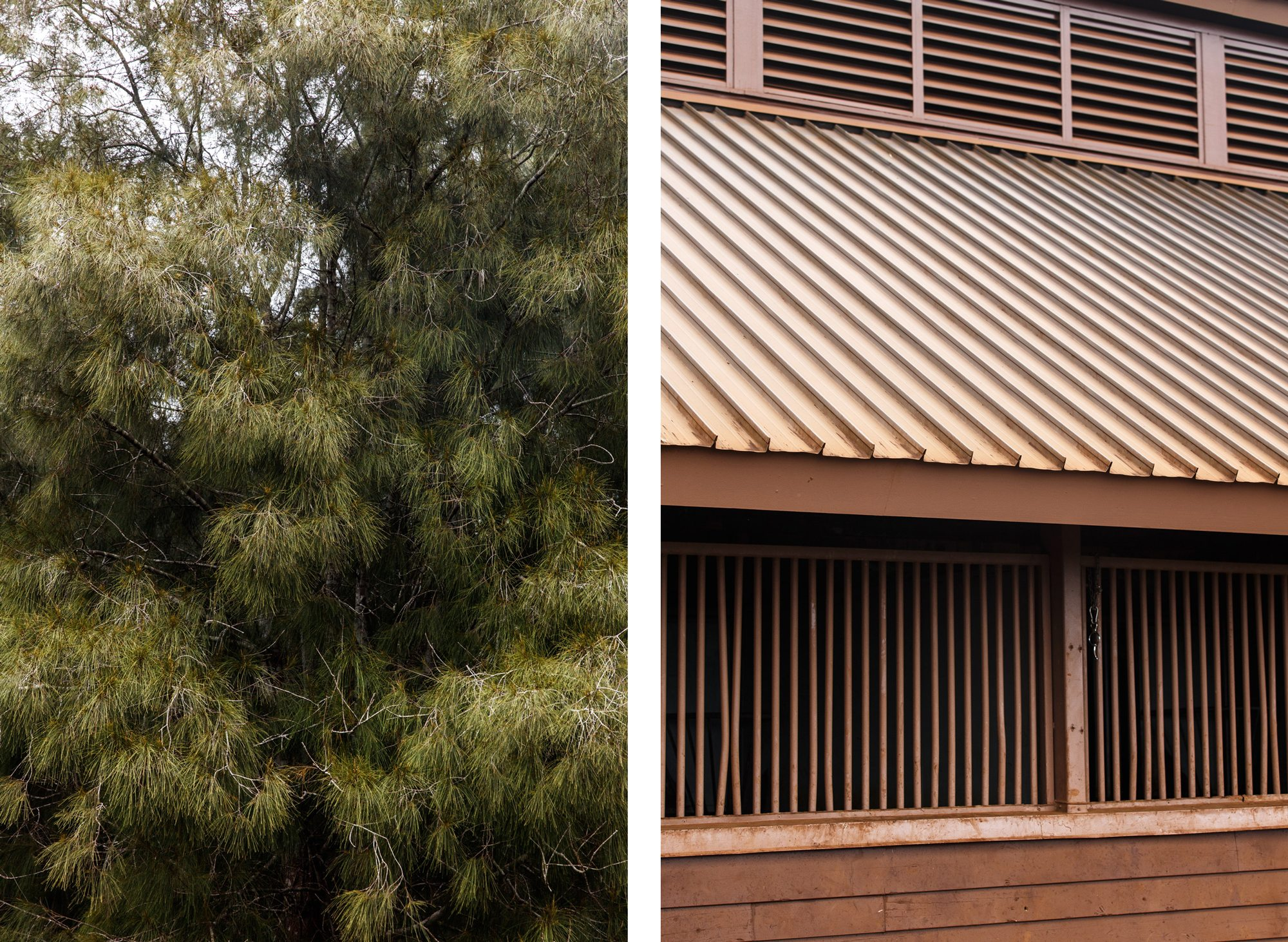 Lanai pine tree, stable roof and window comparison