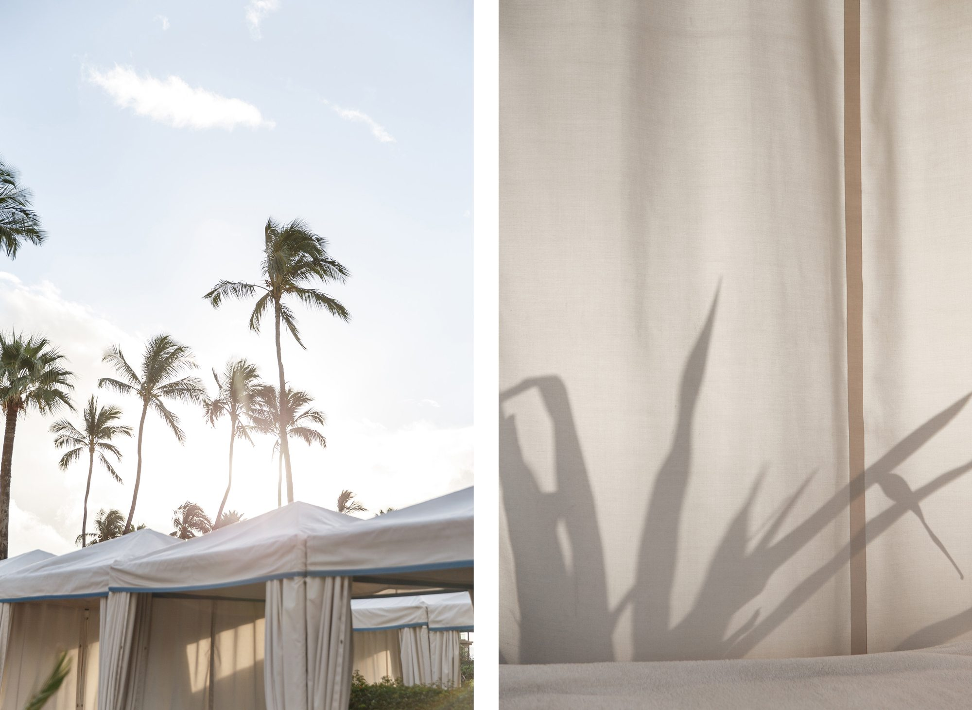 Maui palm trees over cabana, plant shadow comparison