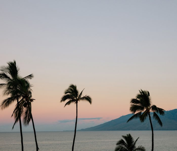 Maui sunset with palm trees