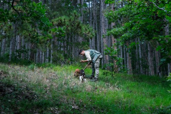 man in woods looking for truffles