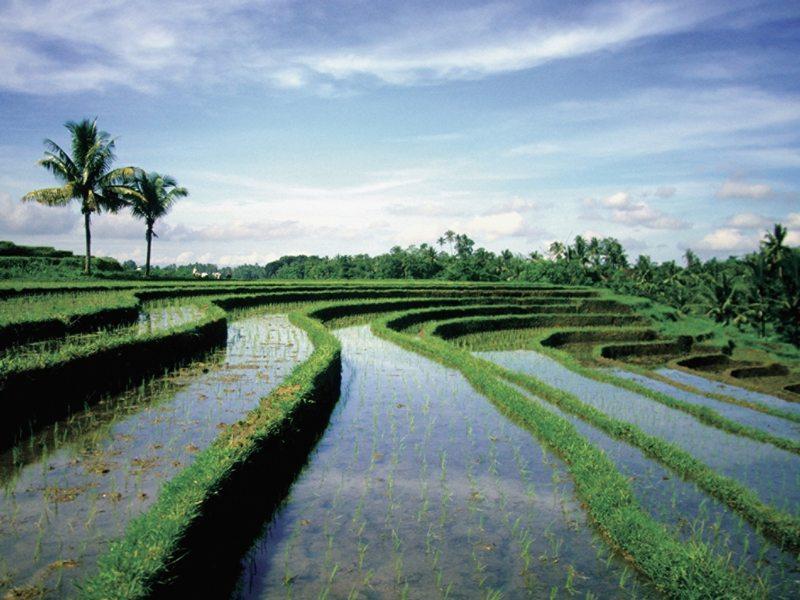 Bali Sayan Ee