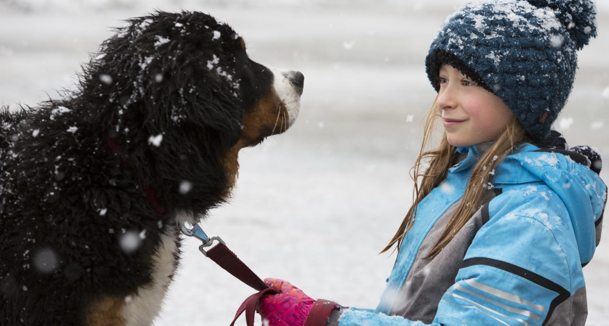 A girl and a Bernese Mountain Dog